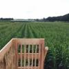 Het maïsdoolhof 2020 is open!