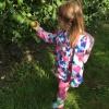 Goed verlopen appelplukdagen 2019