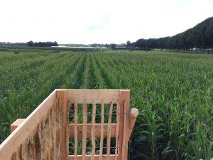 Maisdoolhof-Nieuwslagmaat