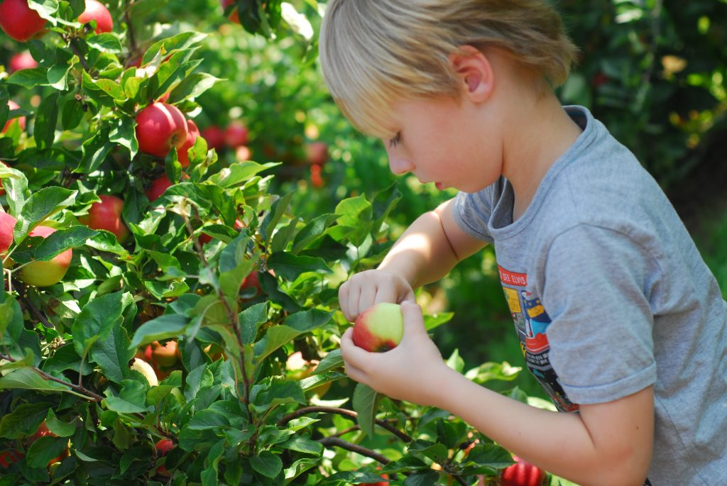 jongen plukt appel